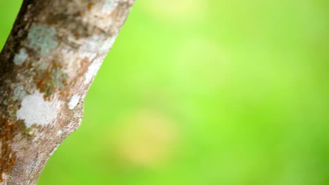 vídeos y material grabado en eventos de stock de lagarto - reptil