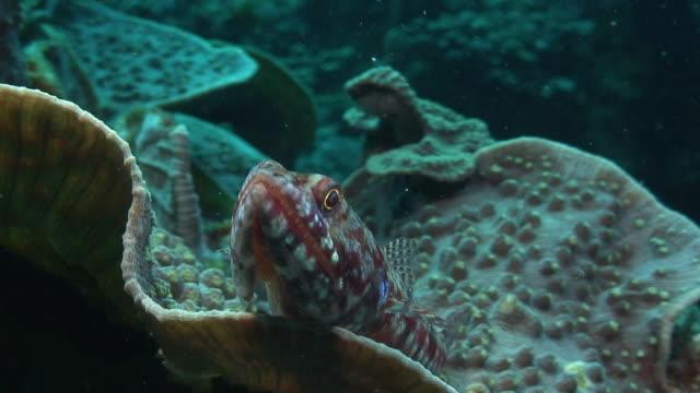 lizardfish - lizardfish stock videos & royalty-free footage
