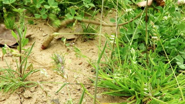 vídeos de stock, filmes e b-roll de rabo de lagartos movendo-se depois de destacado! - cauda