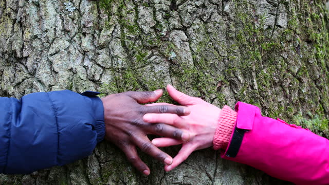 i'll meet you at the middle - tree hugging stock videos & royalty-free footage