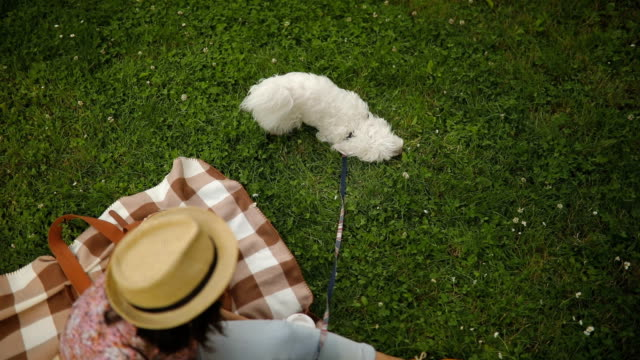 i'll take care of you - maltese dog stock videos and b-roll footage