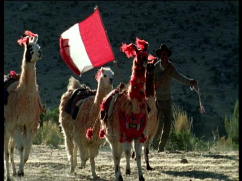 llama racing on andes altiplano - lama oggetto creato dall'uomo video stock e b–roll