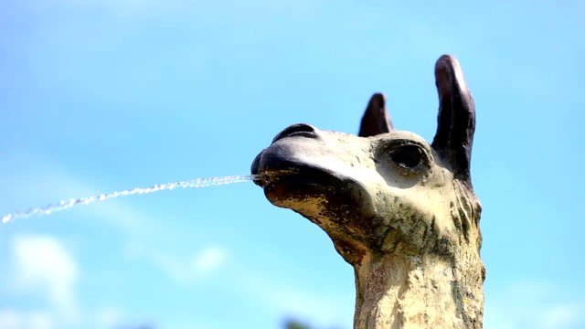 llama spits water - spitting stock videos & royalty-free footage