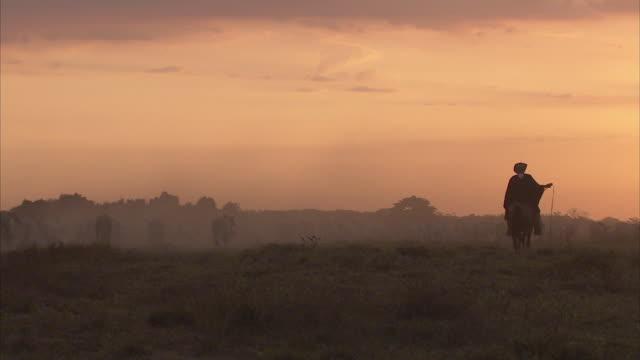 vídeos de stock e filmes b-roll de ws zo llanero riding with whip, herding cattle / sabaneta, barinas, venezuela - planície
