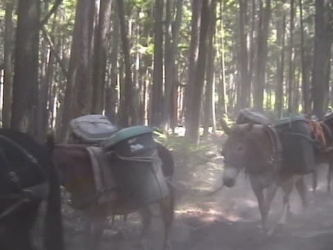 ntsc loaded horses on a mountain path - mule stock videos & royalty-free footage