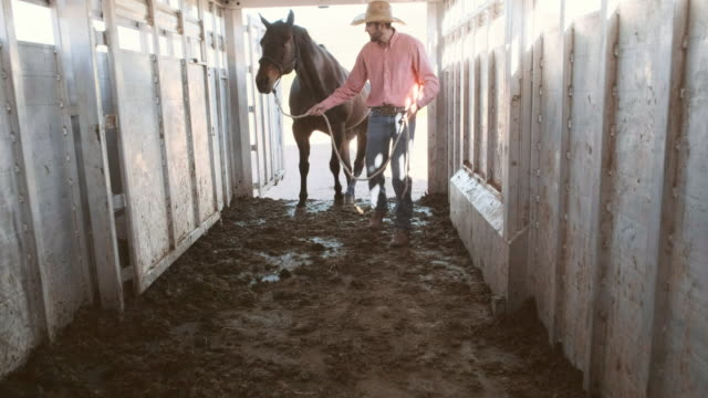 Loading and Unloading Horses in Trailer
