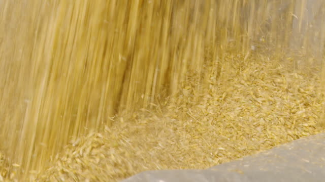 hd slow motion: loading grain into trailer - cereal plant stock videos & royalty-free footage