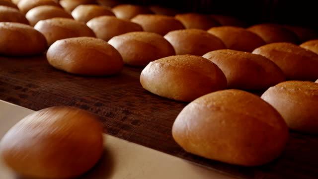 Loaves of fresh crusty bread on tray under sprinkler
