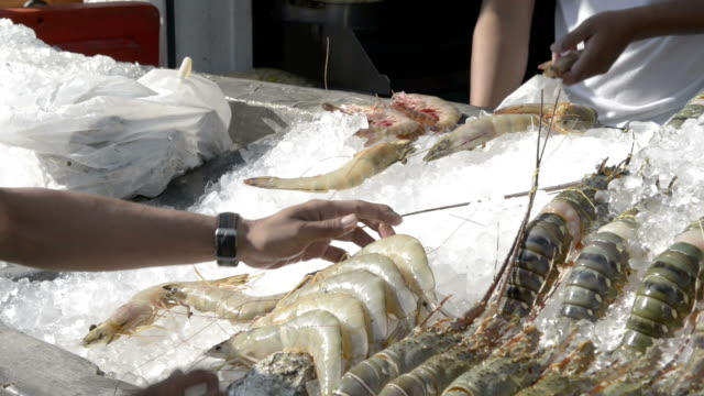 vídeos de stock e filmes b-roll de lobster are served on ice for barbecue - grupo mediano de animales