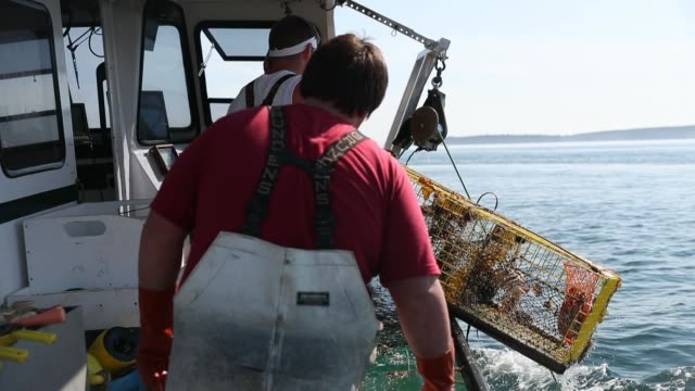 vídeos de stock e filmes b-roll de lobster fisherman nathaniel lane and his boat crew jeremy pratt and lance robbins check on traps in the gulf of maine on july 03, 2019 in deer isle,... - lagosta