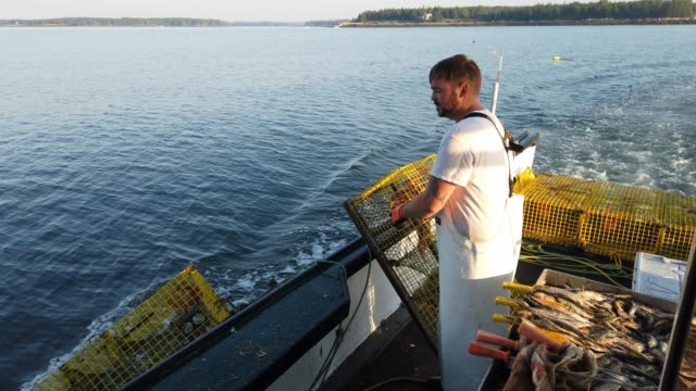 vídeos de stock e filmes b-roll de lobster fisherman nathaniel lane and his boat crew jeremy pratt and lance robbins motor out to check on traps in the gulf of maine on july 03 2019 in... - lagosta