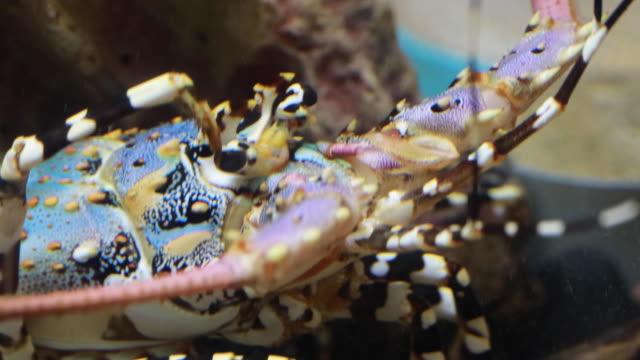 hummer i undervattensvärlden av djuphavsdjur - art bildbanksvideor och videomaterial från bakom kulisserna