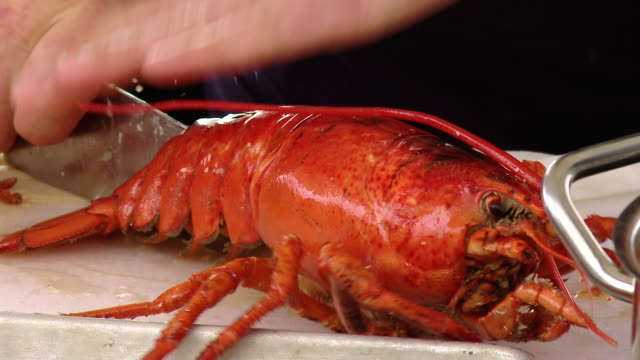 a lobster is cut to get ready to be cook - seafood stock videos & royalty-free footage