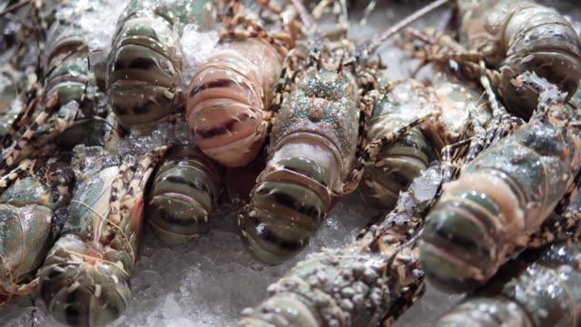 lobster on ice at fish market, bangkok, thailand. - prawn stock videos & royalty-free footage