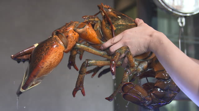 vídeos de stock, filmes e b-roll de a lobster raised by hand - lagosta marisco