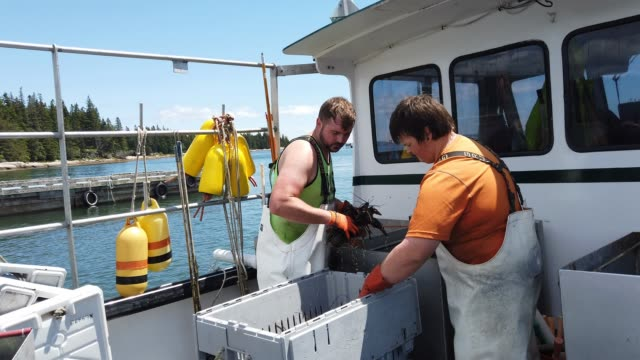 lobstermen are seen at work at the conary cove lobster co inc. wharf on july 01, 2019 in deer isle, maine. reports indicate that since 1982 the... - maine stock videos & royalty-free footage