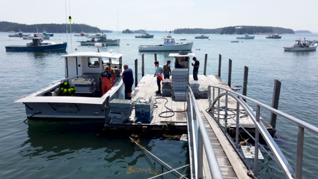 lobstermen are seen at work at the stonington lobster co-op wharf on the shores of the gulf of maine on july 05, 2019 in stonington, maine. reports... - maine video stock e b–roll
