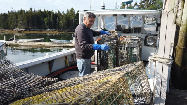 lobstermen load up lobster traps on their boat at conary cove lobster co inc wharf before heading out to set them in the gulf of maine on july 01... - lobster stock videos & royalty-free footage