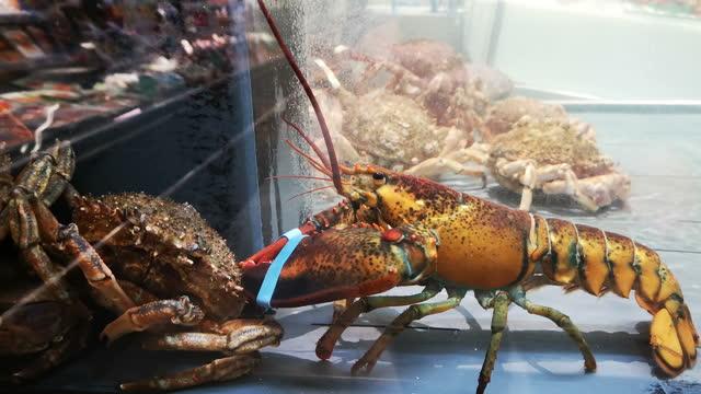 lobsters  in a transparent tank of water - akvatisk organism bildbanksvideor och videomaterial från bakom kulisserna