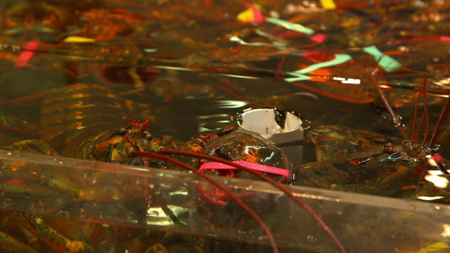 lobsters sold in public market - トロント点の映像素材/bロール