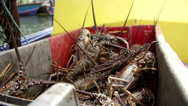 lobsters - flußkrebs tier stock-videos und b-roll-filmmaterial