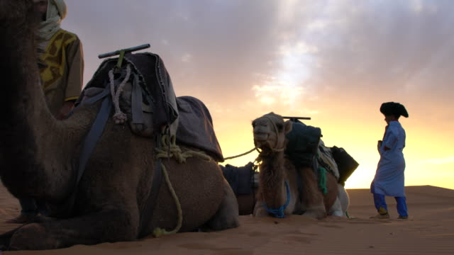 local bedouins with their camels and some tourist among the dunes of erg chebbi at sunset, saharan morocco - ベドウィン族点の映像素材/bロール