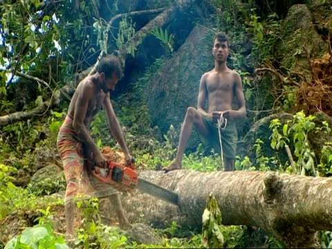 ms 2 local men chainsawing timber - tree trunk stock videos & royalty-free footage