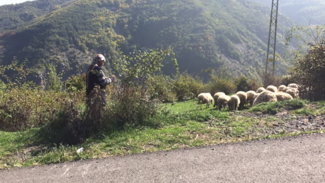 Local Muslim woman (Pomak ethnicity) from Rhodope mountains in Bulgaria with herd of sheep