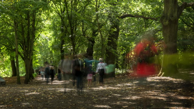 local people and visitors enjoy a summers day walking along a sun dappled tree-lined lane on hampstead heath - field trip stock videos & royalty-free footage