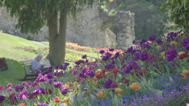 local resident reads in an empty normally busy flower garden at guildford castle during the coronavirus pandemic on april 23, 2020 in guildford,... - flower stock videos & royalty-free footage
