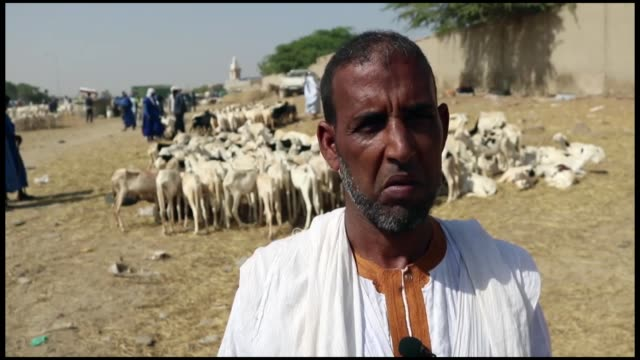 local vendors display and sell sacrificial animals at a livestock market set up for the upcoming muslim holiday of eid al-adha on august 20, 2018 in... - mauritania stock videos & royalty-free footage