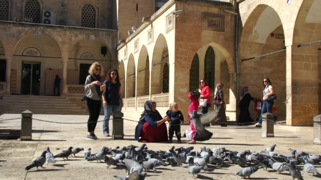 locals and tourist feeding the doves just in front of the the beautiful mosque of abraham in the old part of urfa - turkey middle east stock videos & royalty-free footage