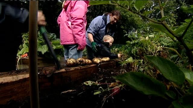ext close shot of potatoes being dug up in allotment small boy and adults lifting up potatoes from garden woman watering flower bed - gemeinschaftsgarten stock-videos und b-roll-filmmaterial