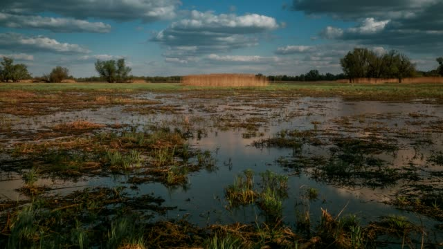 loch and grasses, baranja, croatia - bog stock videos & royalty-free footage