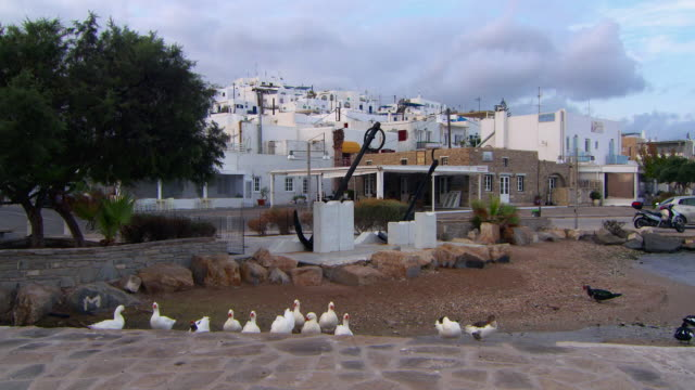 Lockdown: Ducks Preen in Naoussa Harbor in Front of Whitewashed Buildings
