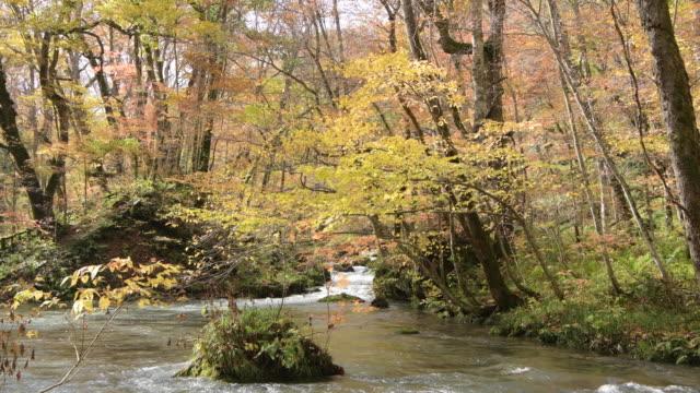 lockdown, lush autumn foliage over oirase river - oirase river stock videos & royalty-free footage
