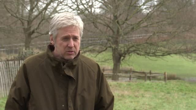 lockdown sees increase in dog attacks on richmond park deer; england: london: richmond park: ext gvs dog walkers and dogs along in park adam curtis... - deer stock videos & royalty-free footage