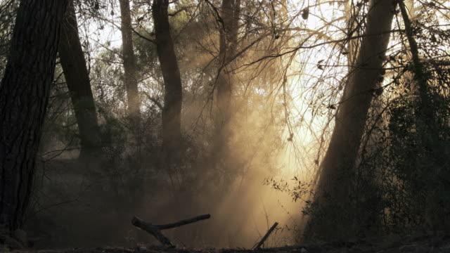 vidéos et rushes de lockdown shot of dust blowing amidst trees and plants - camargue, france - branche partie d'une plante