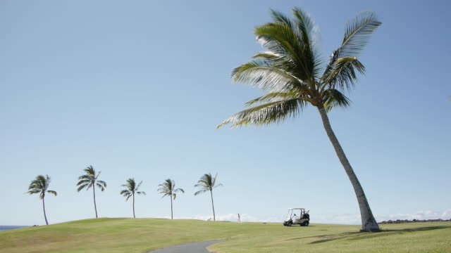 lockdown shot of golfers in distance on field with palm trees against blue sky - golf cart stock videos & royalty-free footage