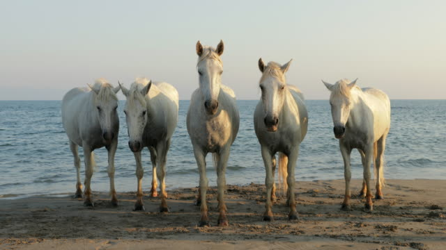 lockdown shot of horses standing on shore at beach against sky during sunny day - camargue, france - cavalry stock videos & royalty-free footage