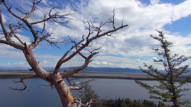 lockdown shot of tree and lake of grand teton national park - grand teton national park stock videos & royalty-free footage