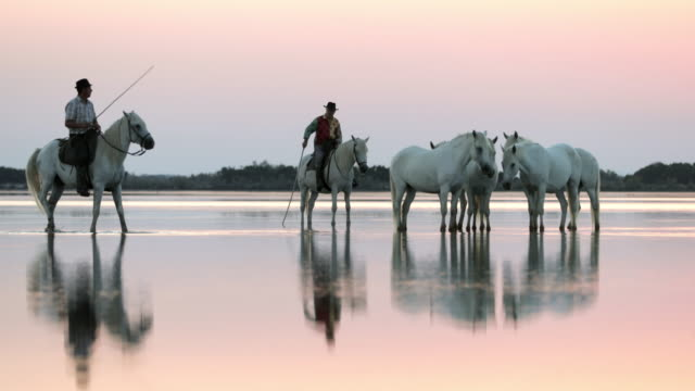 lockdown shot of wranglers and horses at beach with reflection in water against sky during sunset - camargue, france - 雄馬点の映像素材/bロール