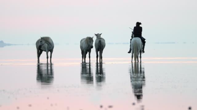 stockvideo's en b-roll-footage met lockdown shot of wranglers with horses in sea against sky during sunset - camargue, france - vier dieren