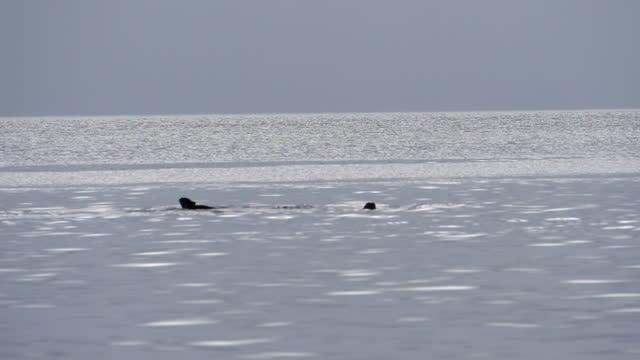 vídeos y material grabado en eventos de stock de lockdown slow motion tail of whale fish diving in sea against clear sky - british columbia, canada - cetáceo