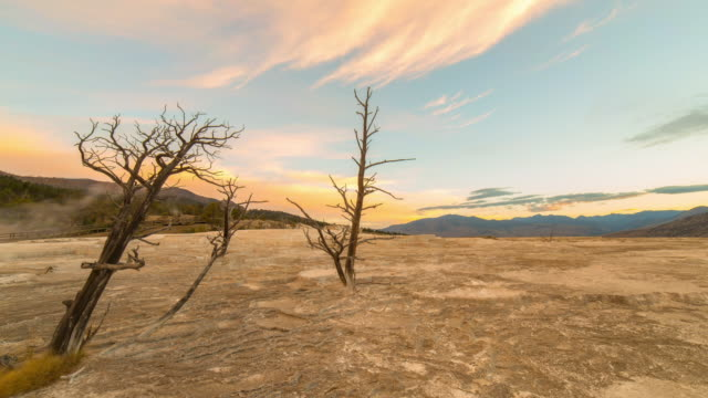 lockdown time lapse shot of bare trees near hot springs against sky during sunrise - yellowstone national park, wyoming - dry stock videos & royalty-free footage