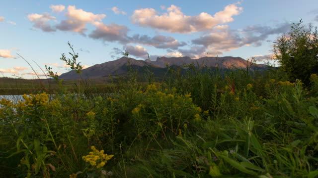 lockdown time lapse shot of flowers near mountains against sky - jasper national park, canada - jasper national park stock videos & royalty-free footage