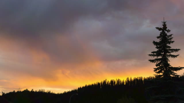 lockdown time lapse shot of silhouette trees against cloudy sky during sunset - jasper national park, canada - jasper national park stock videos & royalty-free footage