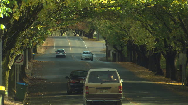 locked off shot cars drive along tree lined avenue pov looking down street under canopy of trees in deep shadow beginning of Autumn colours in trees...