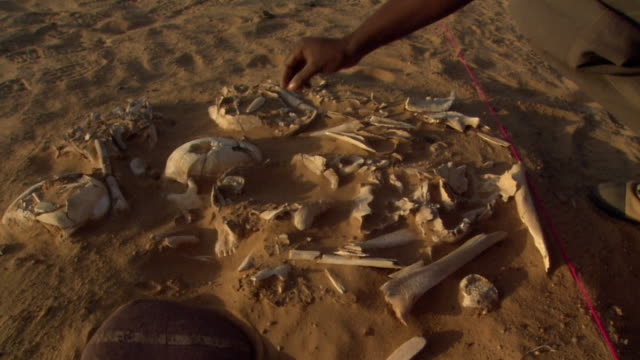 locked off shot of a person observing bones - archaeologist stock videos & royalty-free footage