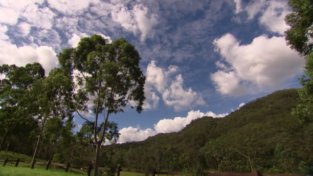 Locked off shot point of view looking up of a small group of trees leaves moving in the breeze fluffy white clouds in blue sky bush covered hills in...